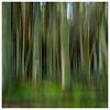ICM - Trees , Portmoak Moss