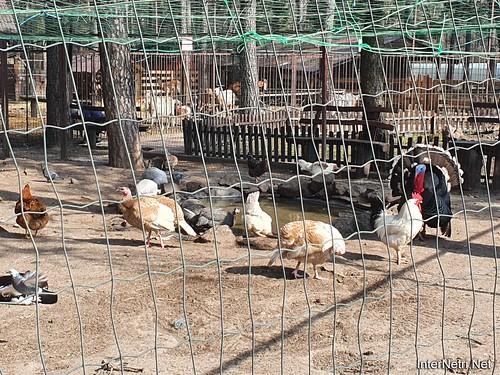 Приватний зоопарк, Петропавлівська Борщагівка біля Київа 13  Ukraine  InterNetri