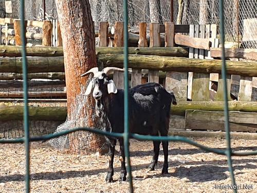 Приватний зоопарк, Петропавлівська Борщагівка біля Київа 08  Ukraine  InterNetri