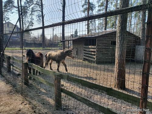 Приватний зоопарк, Петропавлівська Борщагівка біля Київа 07  Ukraine  InterNetri