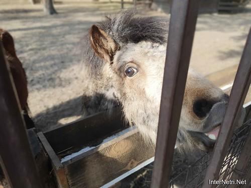 Приватний зоопарк, Петропавлівська Борщагівка біля Київа 03  Ukraine  InterNetri
