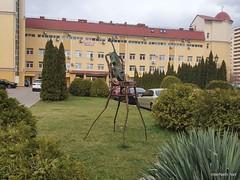 Чайки, біля Київа 05  Ukraine  InterNetri