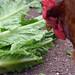 More Chicken Salad