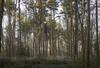 20200326_Dorridge Wood