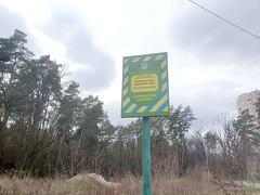 Чайки, біля Київа 08  Ukraine  InterNetri