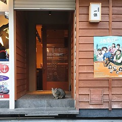 #tbt to when we were allowed to travel. #shopcat in 道頓堀 #道頓堀 #大阪 #店の猫 #猫 #dotonbori #osaka #shopcats #cats