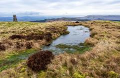 Photo of Pond, Duncolm, Dunbartonshire, Scotland, UK