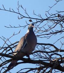 Photo of Pigeons 2