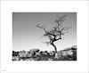 hamspfell tree 2s