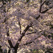 Spring in the time of Coronavirus