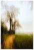 ICM - Trees, Hatchbank Road