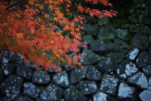 Kanazawa Castle in Autumn