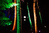 Enchanted Forest , Perthshire