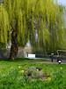 New Spring Greens