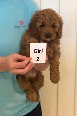 Lola Girl 2 3-27
