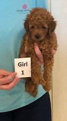 Lola Girl 1 3-27