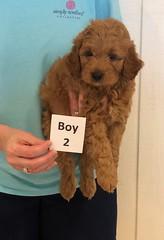 Lola Boy 2 3-27