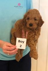 Lola Boy 2 pic 2 3-27