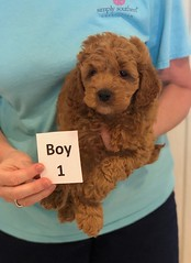 Lola Boy 1 3-27