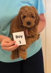 Lola Boy 1 pic 2 3-27