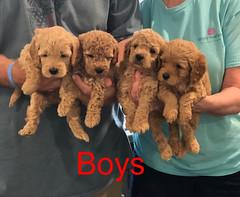 Penny F1B Boys pic 4 3-27