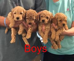 Penny F1B Boys pic 3 3-27