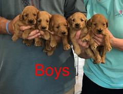 Kasey Boys pic 3 3-27