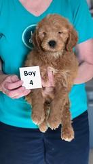 Holly Boy 4 pic 4 3-27