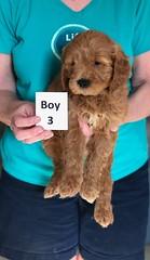 Holly Boy 3 pic 2 3-27
