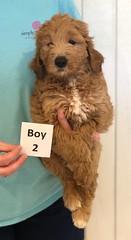 Lyric Boy 2 pic 3 3-27