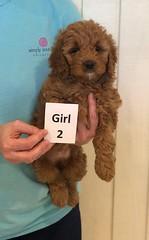 Lola Girl 2 pic 3 3-27