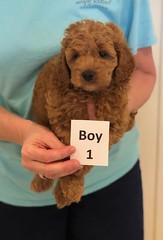 Lola Boy 1 pic 3 3-27
