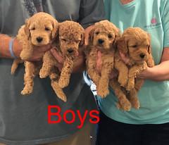 Penny F1B Boys pic 2 3-27