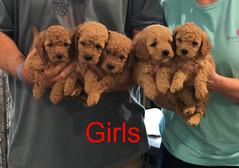 Penny F1B Girls 3-27