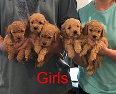 Penny F1B Girls pic 3 3-27