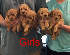 Penny F1B Girls pic 4 3-27