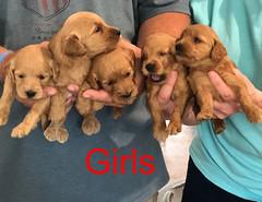 Kasey Girls pic 3 3-27