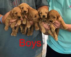 Kasey Boys pic 2 3-27