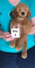 Holly Boy 4 3-27