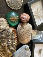 Cabinet of curiosity items