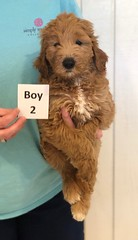 Lyric Boy 2 pic 2 3-27