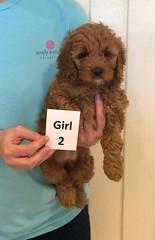 Lola Girl 2 pic 2 3-27