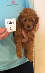 Lola Girl 1 pic 3 3-27
