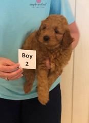 Lola Boy 2 pic 3 3-27
