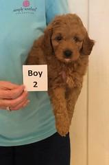 Lola Boy 2 pic 4 3-27