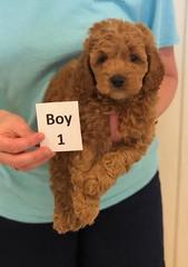 Lola Boy 1 pic 4 3-27
