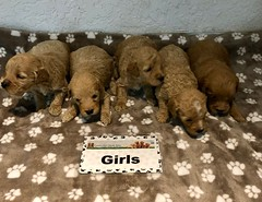 Kizzie Girls pic 4 3-27