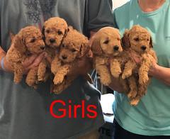 Penny F1B Girls pic 2 3-27