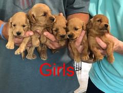 Kasey Girls pic 2 3-27