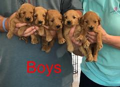 Kasey Boys pic 4 3-27